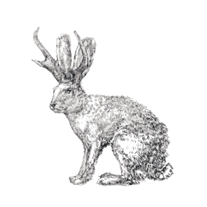 Illustration of a jackalope